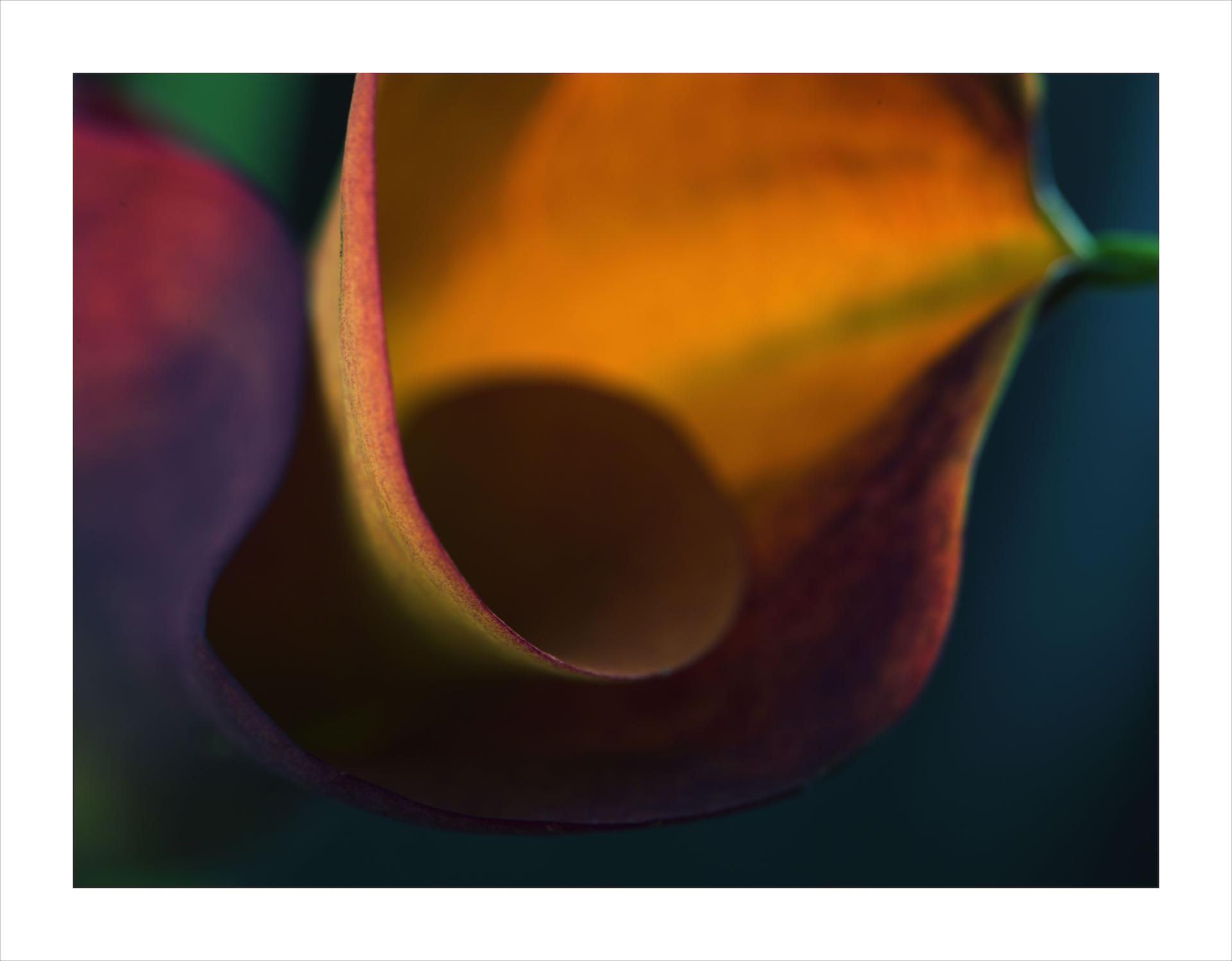 Untitled (Orange) by JESSICA TAMPAS